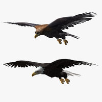Eagles (ANIMATED)